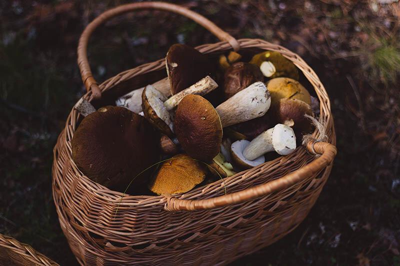 Torkade-svampar